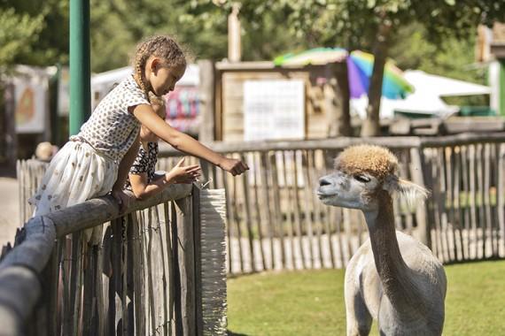 Kinderboederij 't Boetje met Alpaca's voeren